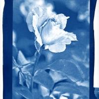 Cyanotype Serenity