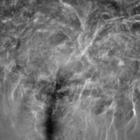 Photograms-Water-Tree