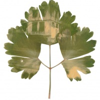Photosynthesis-Bulgaria-Building-Grannies-Bonnets