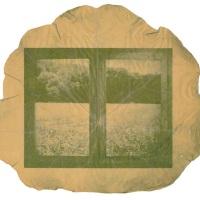 Photosynthesis-Cupboard-of-fields-Nasturtium