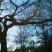 Pinhole Tree Tops