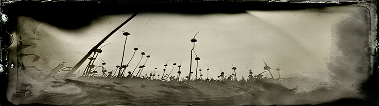 Wetplate collodion Army of Darkness