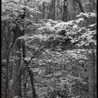 Carbon print South Carolina 27x17