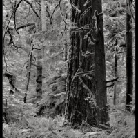 Carbon print Vancouver Island 2