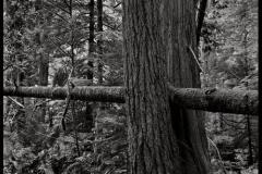Carbon print Vancouver Island 1