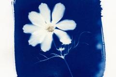 Cyanotype Cyantho