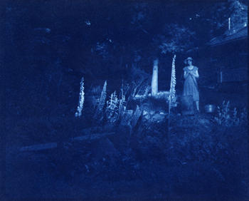 Cyanotype Conversing with Foxgloves