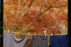 Gum over cyanotype Autumnal Domestic