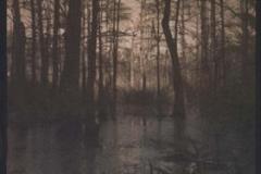 Gum over cyanotype Swamp Scene 99