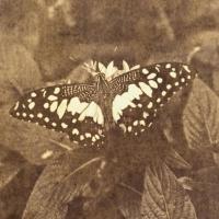 Saltprint Butterfly