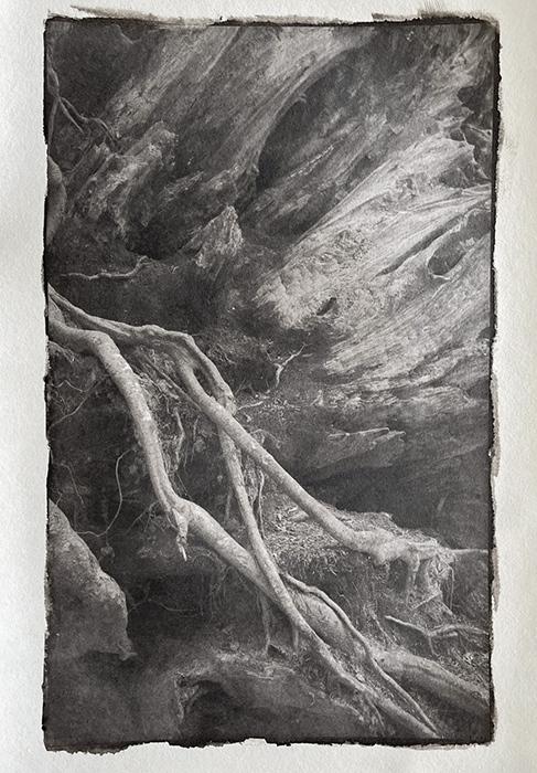 Platinotype-Ancient-Redwood-Roots