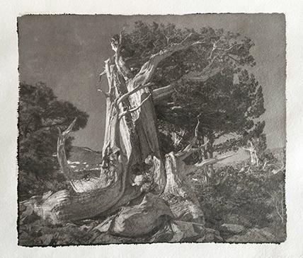 Platinotype-Kozopaper-Ancient-Juniper-2
