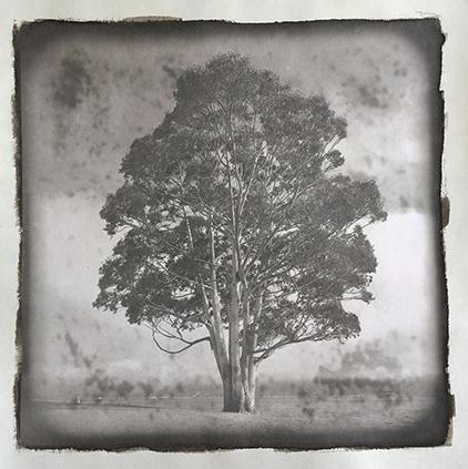 Platinotype-Kozopaper-LoneTree
