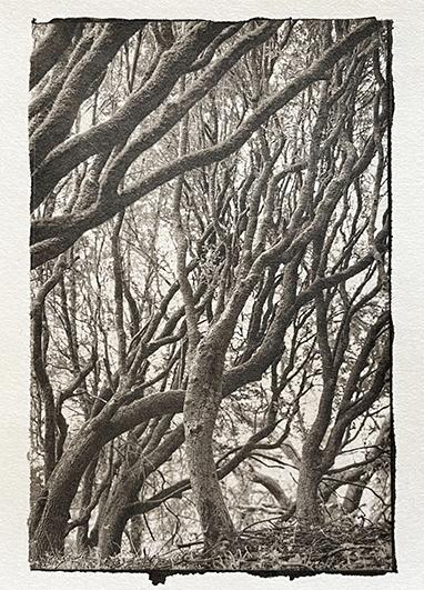 Platinotype-Kozopaper-TreeLines