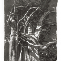 Platinotype-Kozopaper-Ancient-Juniper