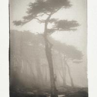 Platinotype-LandsEnd-Fog