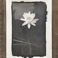 Platinotype-Water-lilly