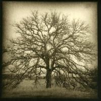 Lith print Single Oak