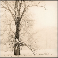 Lith print Snowy Tree