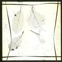 Photogram Skeletonized Leaves