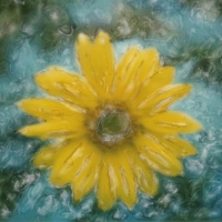 Polaroid SX-70 Sunflower 1