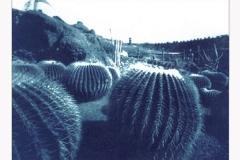 Cyanotype Jardin de Cactus