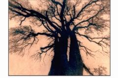 Toned Cyanotype Eschenau tree