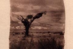 Toned Cyanotype Topos