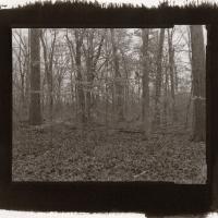 Kallitype Blendon Woods 1