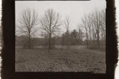 Kallitype Blendon Woods 2