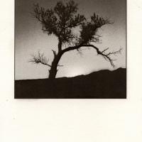 Kallitype Bosque del Apache