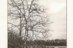 Prairie Oaks in Winter