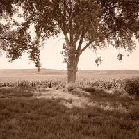 Private Lands