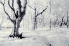 Lithprint Untitled b3
