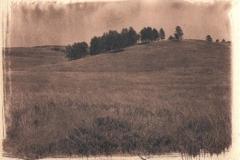 Cyanotype toned Buffalo roam
