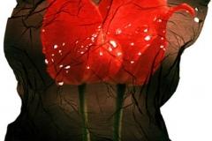 Polaroid emulsion lift Dark tulips