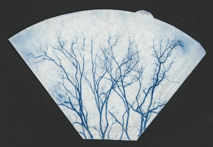 Cyanotype-Coffee-Filter-Trees