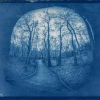 Cyanotype-AMORY-WOODS-2