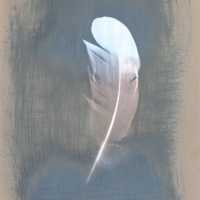 Cyanotype Over Lumen print quill