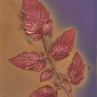 Tomato Leaf #5_10