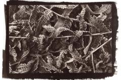 Vandyke Frozen Ferns