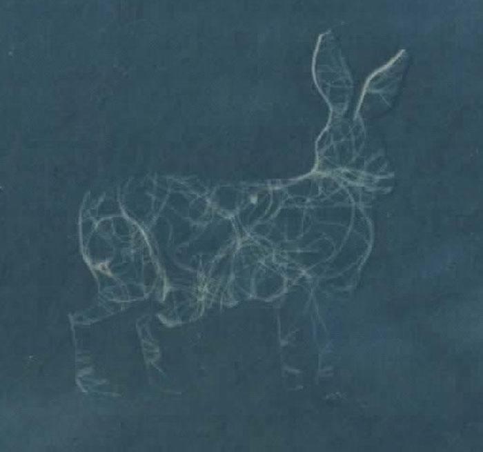 Caroline Stealy, UK, Thread Hare