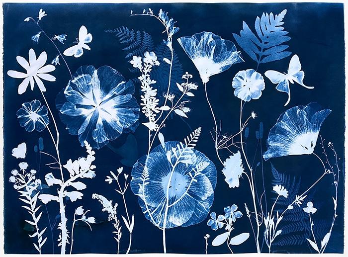 Julia-Whitney-Barnes-USA-Nocturnal-Nature-series