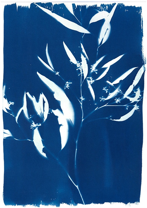 Kristina-Vanan-Australia-Flowering-Gum