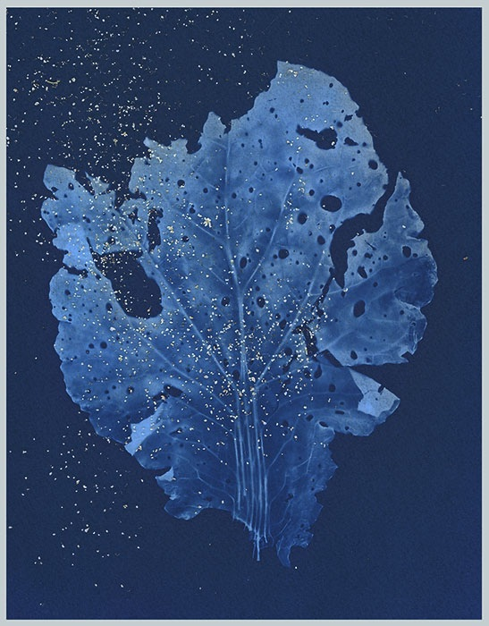 Laurie-Morrison-Canada-Blue-Silence