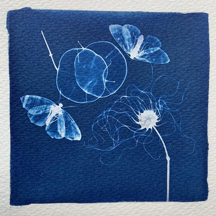 Margarita-Schwartzel-Canada-Lunaria-Clematis-and-Looper-Moths
