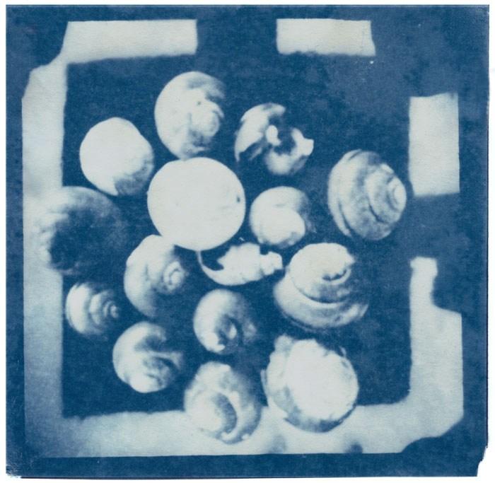 Siegfried-Buerger-Germany-Snail-Shells-2