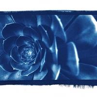 Pat-Sathienthirakul-Thailand-Blue-flower