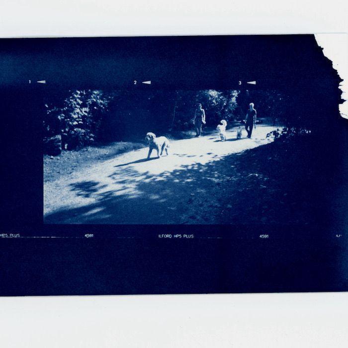 Dean-Lastoria-Canada-Dog-Trail