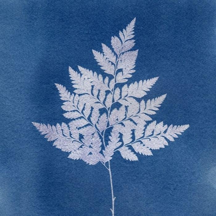 Diana-Caragan-USA-Spring-Fern